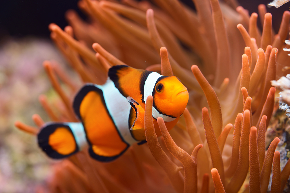 4UdEs7tTKwLJbxZPUYR3hF - 4 Most Beautiful Fishes You Can Find In Earth's Waters